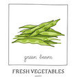 hand drawn of isolated green beans vector image