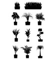 house plants silhouettes plant grown in a vector image