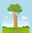 spring tree in a field vector image vector image