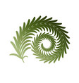 twig fern curl image isolated on white vector image vector image