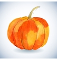 Watercolor pumpkin on white background vector image vector image