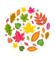 autumn leaves round background fall leaf design vector image