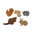 small gnawing animals set isolated on white vector image vector image