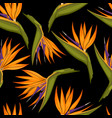 tropical flowers seamless pattern vector image