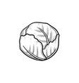 cabbage hand drawn sketch icon vector image
