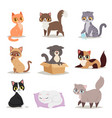 cute cats character different pose vector image