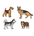 dogs different breeds in color set1 vector image vector image