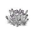 flower hand drawing hand drawn herb and vector image