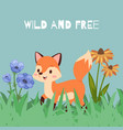 fox animal banner wild and free vector image