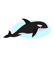 orca icon whale killer isolated on white vector image