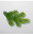 spruce branch isolated on background christmas vector image vector image
