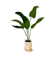 A plant is placed vector image vector image