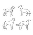 dogs different breeds in outlines set3 vector image