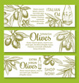 olive oil sketch banner of green branch and fruit vector image vector image
