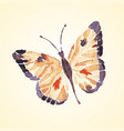 isolated detailed tropical butterfly vector image