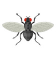fly icon small black insect with wing vector image vector image