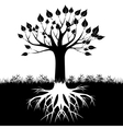Tree roots silhouette vector image vector image