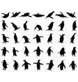 black silhouettes penguins vector image