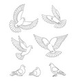 set white doves in contours vector image