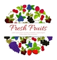 Fresh fruits and berries fruit banner vector image vector image