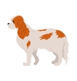Cavalier king charles spaniel vector image