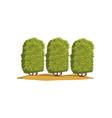 coffee tree plantation on a vector image vector image