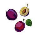plum sliced plum half plum vector image vector image