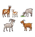 set different goats vector image vector image