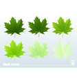 Green maple leaf Set vector image vector image