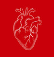 heart the internal human organ anatomical vector image vector image