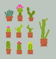 Home succulent plants cactus in ceramic pots