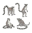 lemurs in different poses vector image