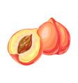 ripe peach and slice vector image