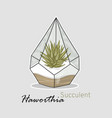 succulent haworthia hand drawing linear style vector image vector image