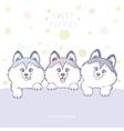 Three cute puppy color vector image