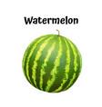 watermelon realistic ripe vector image vector image