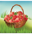 basket with apples on the lawn harvest apples vector image vector image