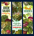 salads vegetables sketch banners vector image vector image