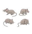 grey mice vector image