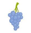 isabella grapes icon cartoon style vector image