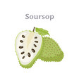 soursop whole and cut fruit edible plant vector image vector image