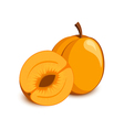 Apricot icon vector image vector image