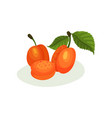 delicious apricots with green leaves natural vector image