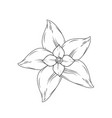line chamomile flower with petals to organic vector image vector image