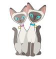 Siamese Cats vector image vector image