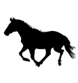 silhouette of the black horse vector image vector image