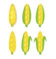 yellow corn in flat and realistic style vector image vector image