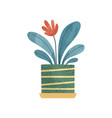 flowering decorative houseplant elegant home or vector image vector image