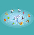 genetically modified organisms isometric flowchart vector image vector image