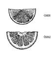 lemon and orange wedges vector image